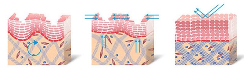 дію пептидів на шкіру