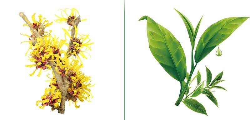 рослинні екстракти в складі сироваток